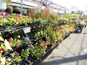 Retail and Wholesale Home Garden Center