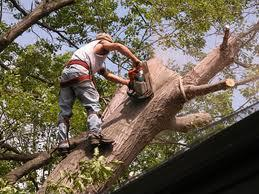 Tree Service Busines...