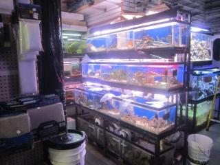 Mega Pet Store in Nassau County, NY
