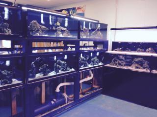 Businesses For Sale-Businesses For Sale- High Class Aquarium -Buy a Business