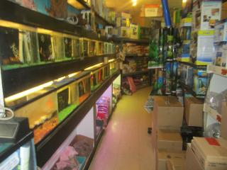 Pet Shop for Sale in Suffolk County, NY