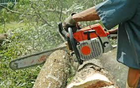 Tree Service in Suffolk County, NY