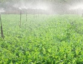 HighEnd Agricultural...