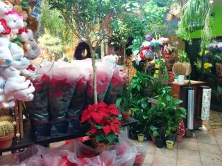 Profitable Florist for Sale in Queens County, NY