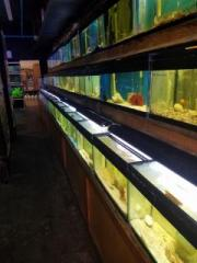 Aquariam Fish Store