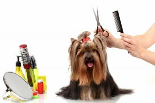 Pet Grooming Spa