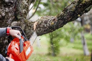 Tree Service for Sale in Passaic County, NJ