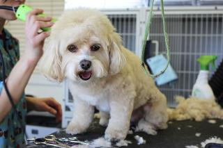 Pet Grooming Business for Sale in Bergen County, N