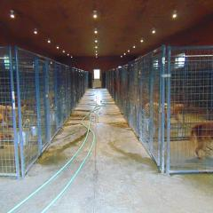 Dog Kennel Party Rental Business