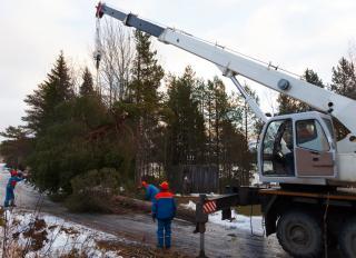 Well Estb Tree Serv