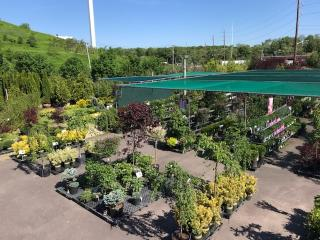 Award Winning Nursery/Garden Center