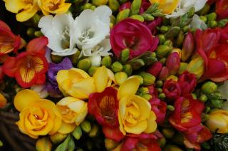 Florist For Sale In Essex County, MA