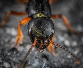 Full Service Pest Control Business in PA