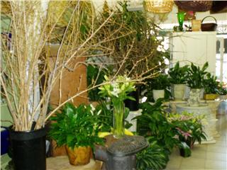Businesses For Sale-Businesses For Sale-Beautiful Flower Shop-Buy a Business